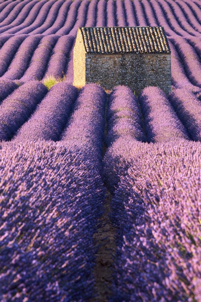 10-lieux-incontournables-découvrir-en-France-valensole-lavende-provence-maurice-style-ok