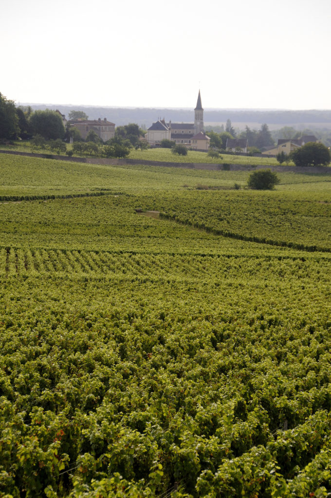 voyager en-France-vignoble-bourgogne-maurice-style